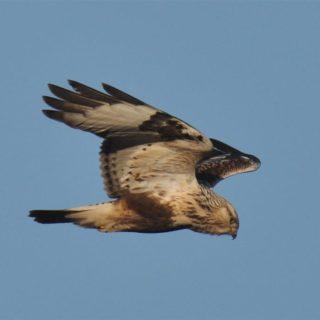 Vögel beobachten Peter Meffert